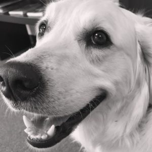 Dog Arthritis/Pain