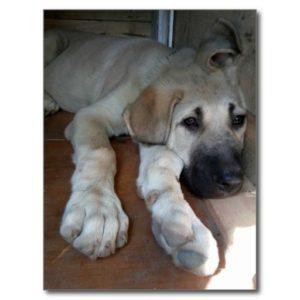 Dog Gastrointestinal