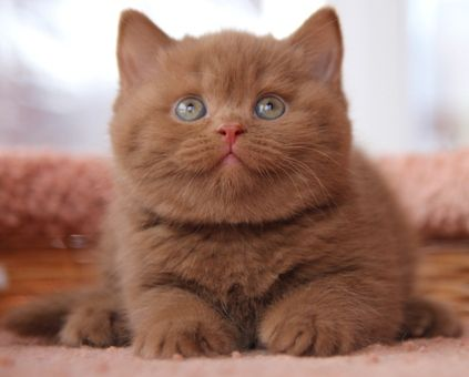 Cat Intestinal Parasites