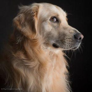 Dog Antiemetic