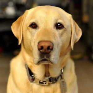 Dog Ophthalmic