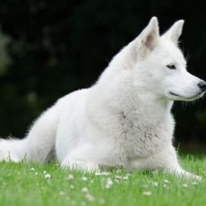 Dog Topical Antifungal
