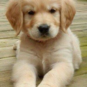 Dog Stool Softener